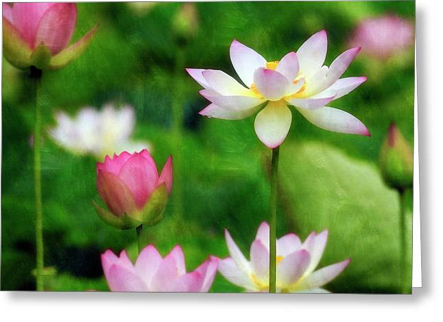 Greeting Card featuring the photograph Brushed Lotus by Edward Kreis