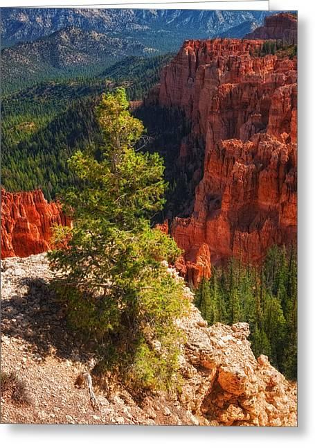Bryce Canyon - Pine Tree Greeting Card