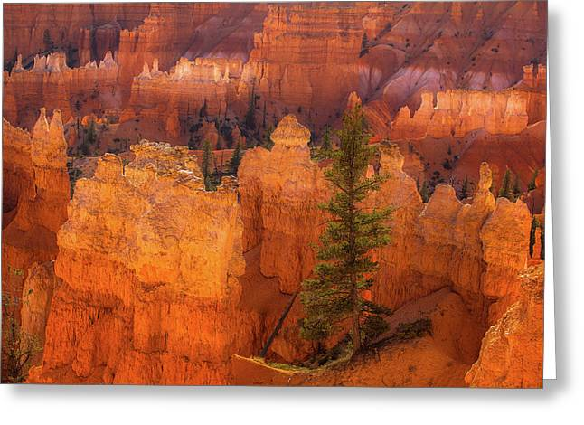 Bryce Canyon And Tree Greeting Card