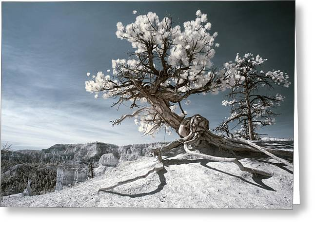 Greeting Card featuring the photograph Bryce Canyon Infrared Tree by Mike Irwin