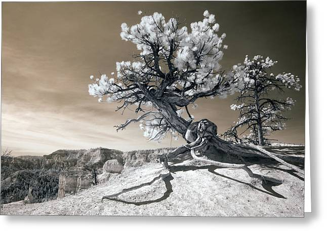 Infrared Greeting Cards - Bryce Canyon Tree Sculpture Greeting Card by Mike Irwin
