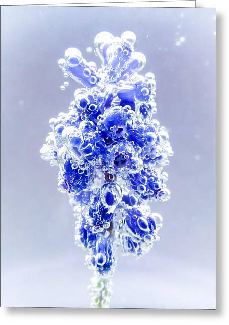 Bubble Blues Greeting Card by LeAnne Perry