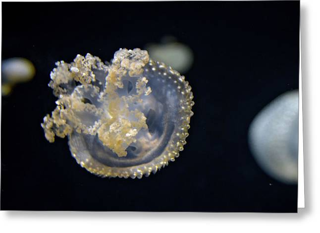 Australian Spotted Jellyfish 4 Greeting Card