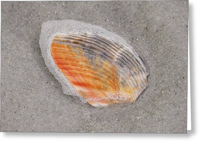 Bubbly Cockle Shell Greeting Card by Gregory Letts