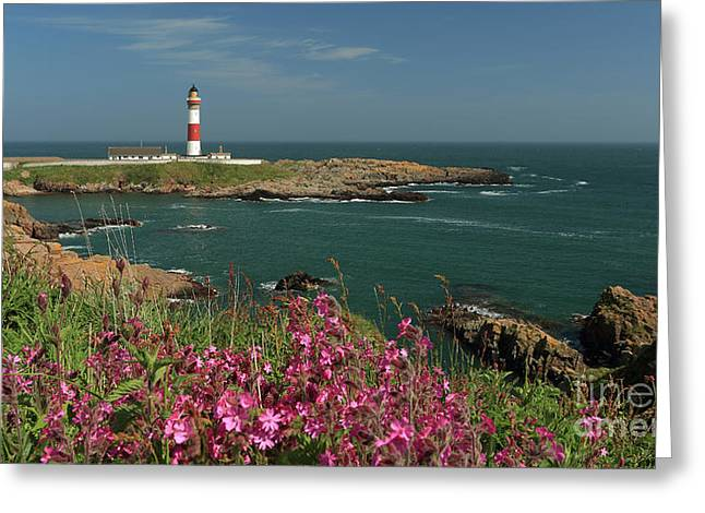 Buchan Ness Lighthouse And Spring Flowers Greeting Card