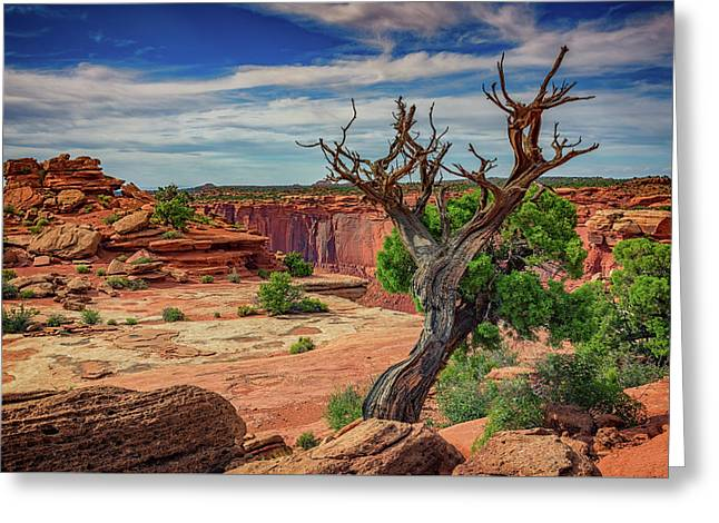 Buck Canyon Overlook Greeting Card by Rick Berk