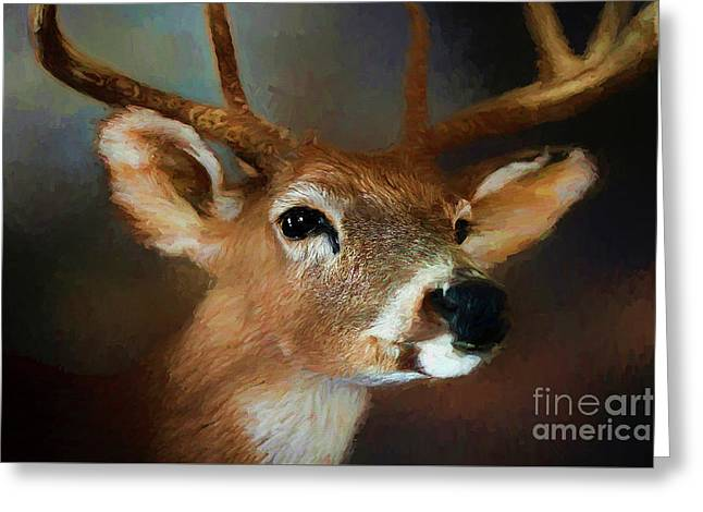 Greeting Card featuring the photograph Buck by Darren Fisher
