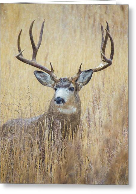 Buck In Snow Greeting Card