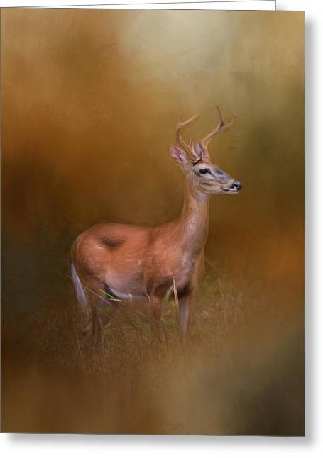 Buck In The Woods Greeting Card by Jai Johnson