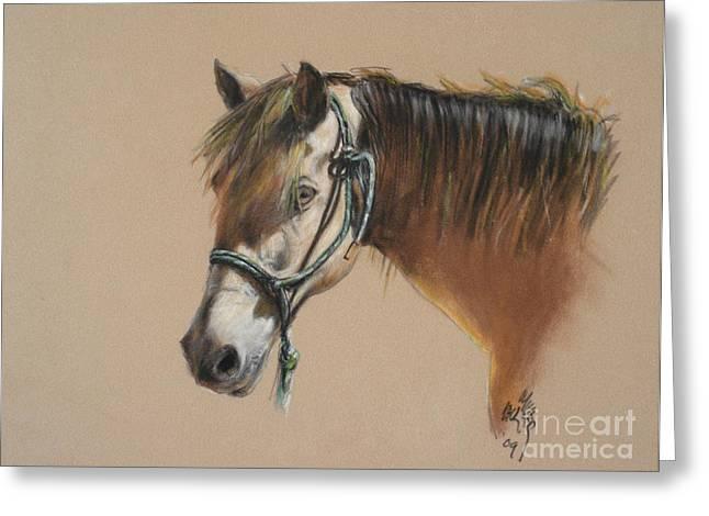 Buck Of The Morgan Horse Ranch Prns Greeting Card