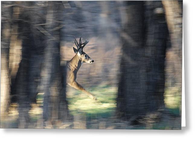 Thru Greeting Cards - Buck Running thru the woods Greeting Card by Ernie Echols