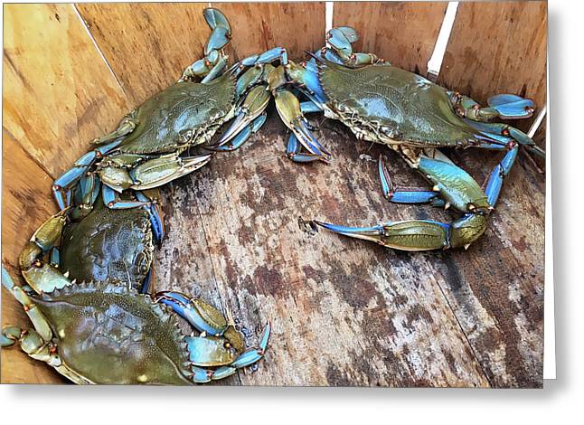 Greeting Card featuring the photograph Bucket Of Blue Crabs by Jennifer Casey