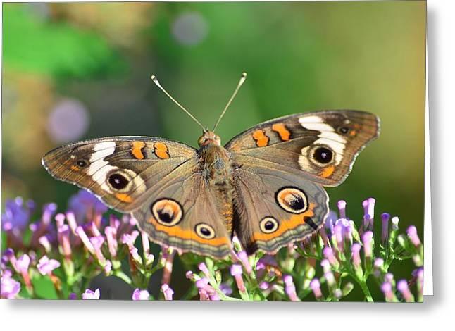 Buckeye Butterfly Greeting Card by Kathy Eickenberg