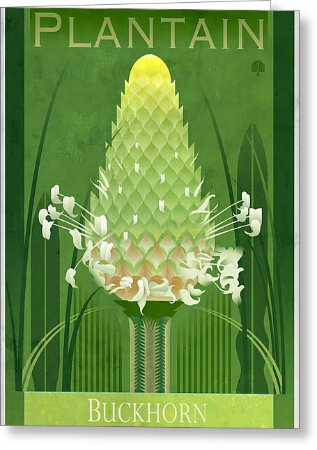 Plantain Buckhorn Floral Poster Greeting Card