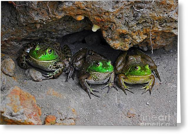 Bud Bullfrogs Greeting Card by Al Powell Photography USA