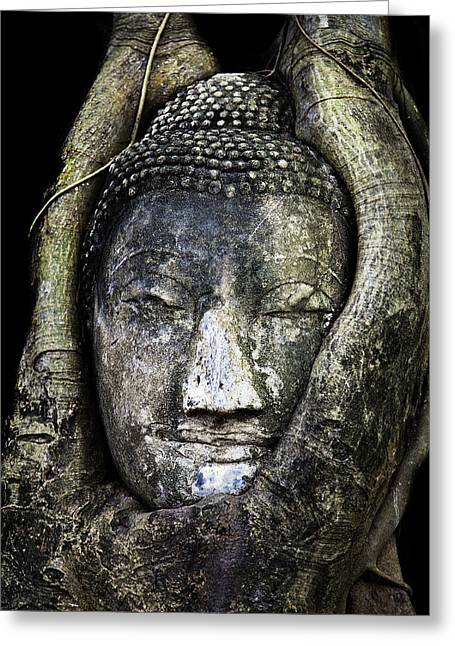 Buddhism Digital Art Greeting Cards - Buddha Head in Banyan Tree Greeting Card by Adrian Evans
