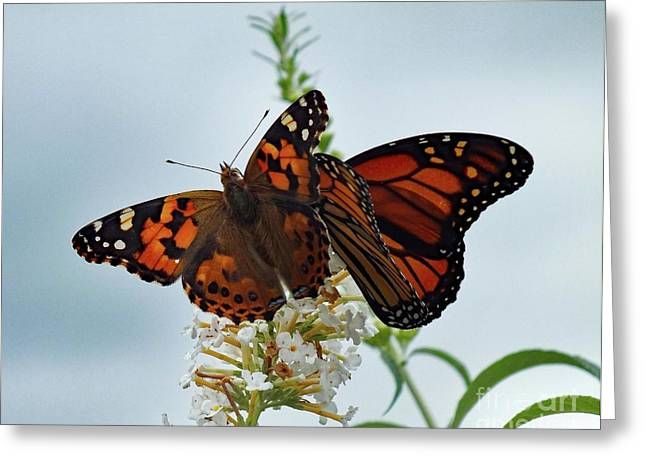 Buddies - Painted Lady And Monarch Greeting Card