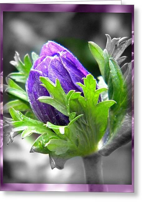 Budding Flower Greeting Card by Amanda Eberly-Kudamik