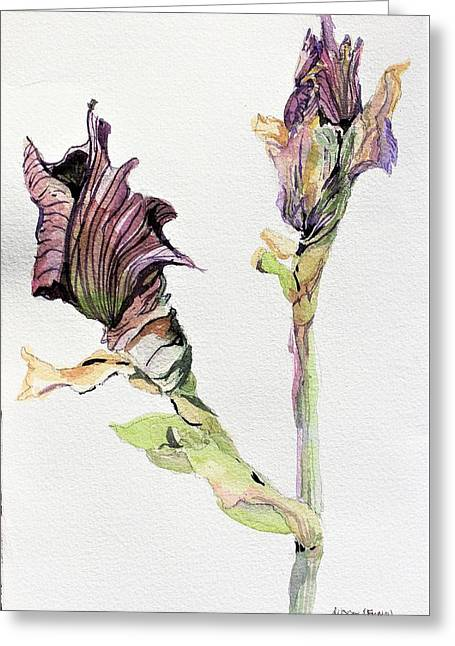 Budding Irises Greeting Card by Mindy Newman