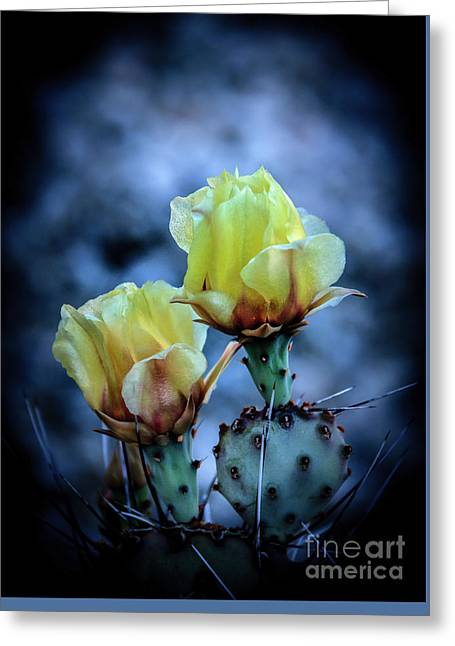 Budding Prickly Pear Cactus Greeting Card
