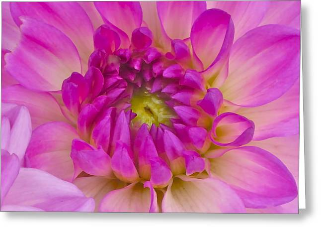 Floral Photographs Greeting Cards - Buddy Up Close Greeting Card by Gwyn Newcombe