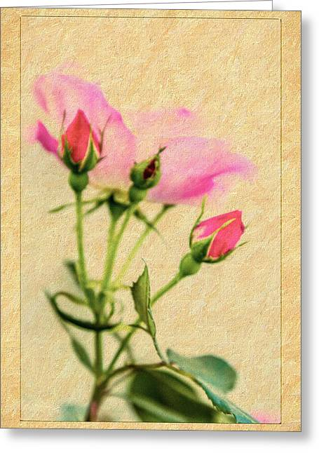 Buds And Bloom - Rose Floral Greeting Card by Barry Jones