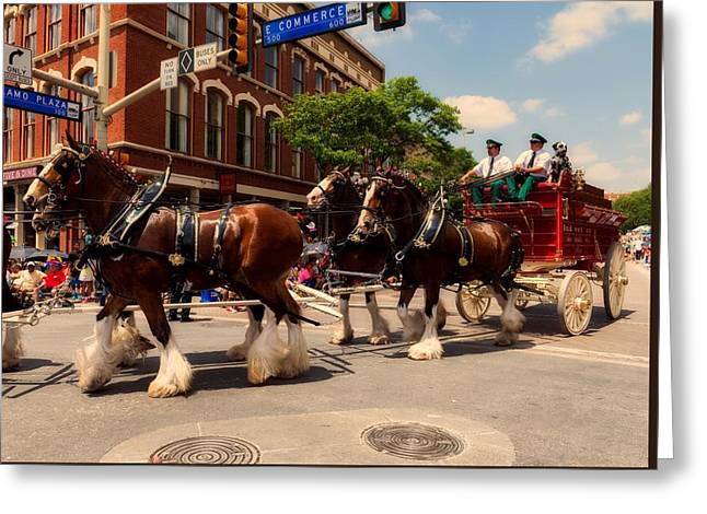 Budweiser Clydesdales In San Antonio Greeting Card