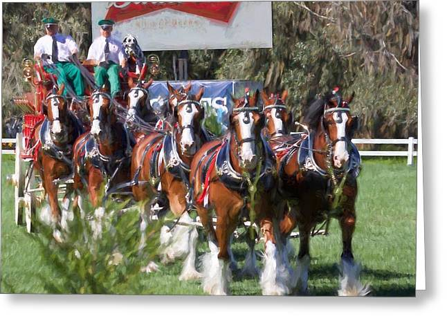 Budweiser Clydesdales Perfection Greeting Card