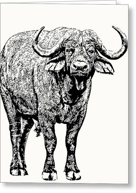 Buffalo Bull, Full Figure Greeting Card