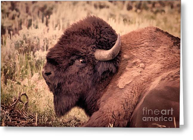 Greeting Card featuring the photograph Buffalo Eye On You by Janice Rae Pariza