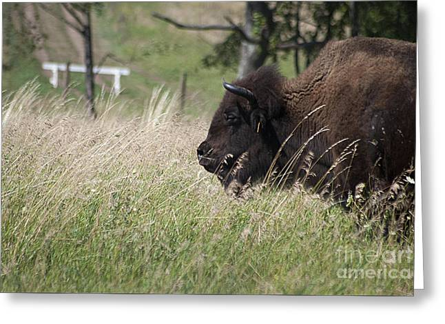 Greeting Card featuring the photograph Buffalo Gal 20120724_378a by Tina Hopkins