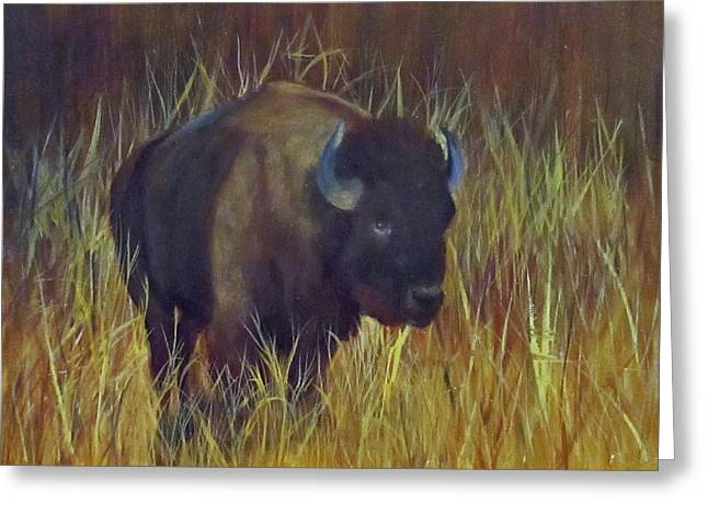 Buffalo Grazing Greeting Card by Roseann Gilmore