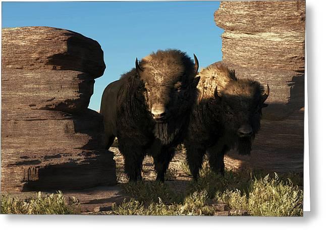 Buffalo Guard Greeting Card by Daniel Eskridge