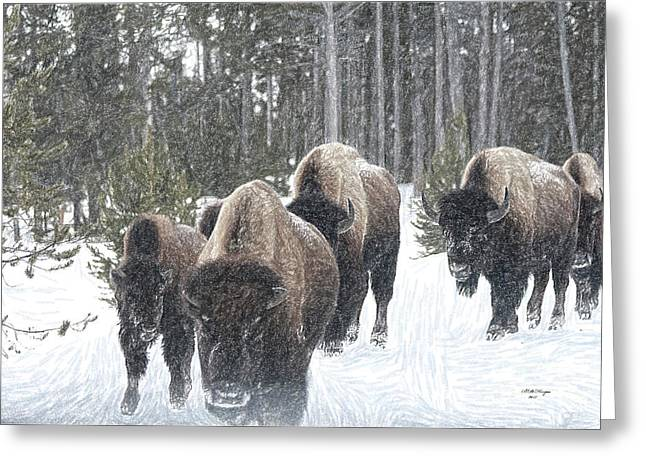 Buffalo Herd Emerges From The Snowy Yellowstone Mist Greeting Card by Bill And Deb Hayes