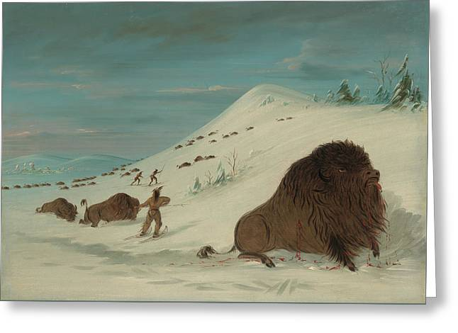 Buffalo Lancing In The Snow Drifts - Sioux American Greeting Card by Mountain Dreams