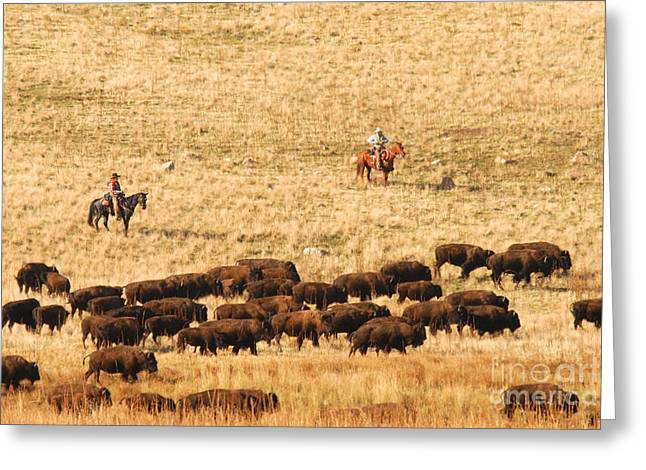 Buffalo Roundup Greeting Card by Dennis Hammer