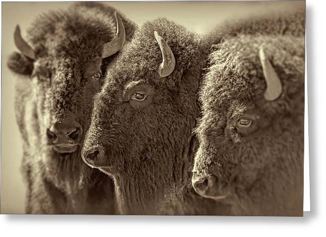 Greeting Card featuring the photograph Trio American Bison Sepia Brown by Jennie Marie Schell