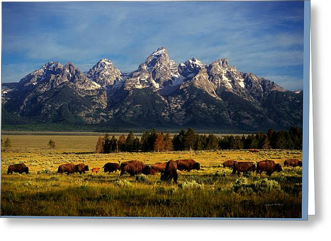 Buffalo Under Tetons Greeting Card