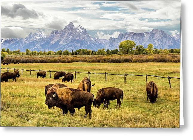 Buffalo Under The Tetons Greeting Card by TL  Mair