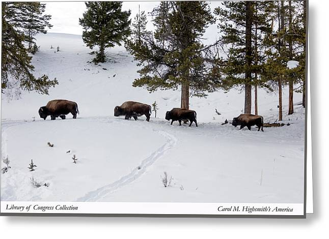Greeting Card featuring the photograph Buffaloes In Yellowstone National Park by Carol M Highsmith