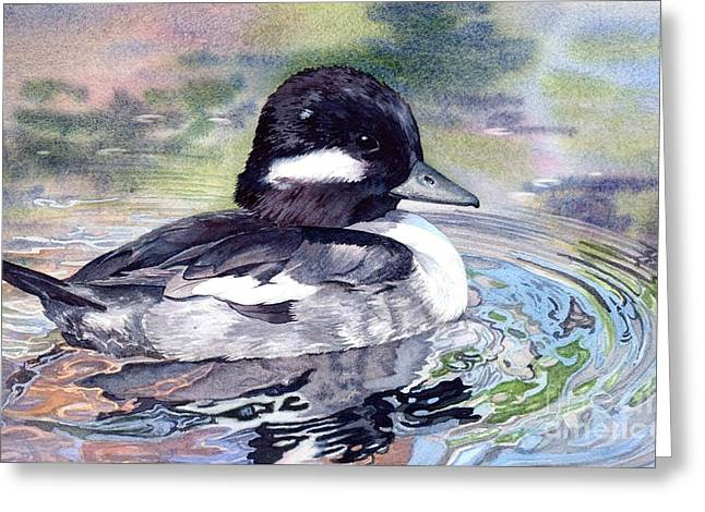 Bufflehead Duck Greeting Card by Lorraine Watry