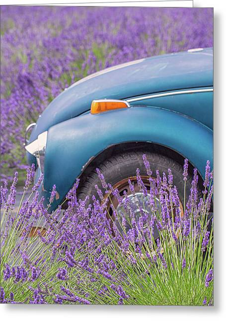 Greeting Card featuring the photograph Bug In Lavender Field by Patricia Davidson