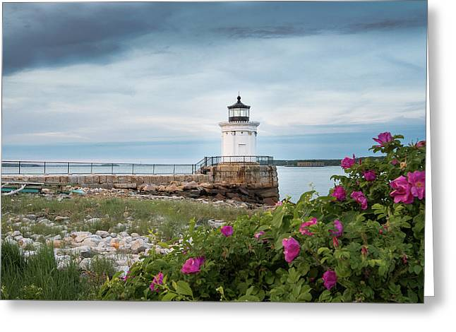 Bug Light Blooms Greeting Card
