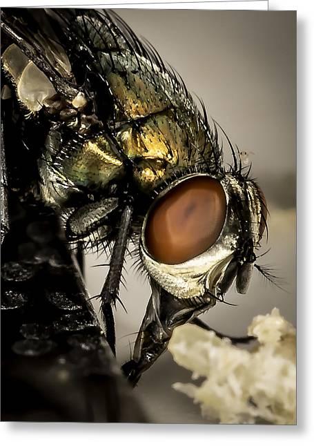 Bug On A Bug Greeting Card