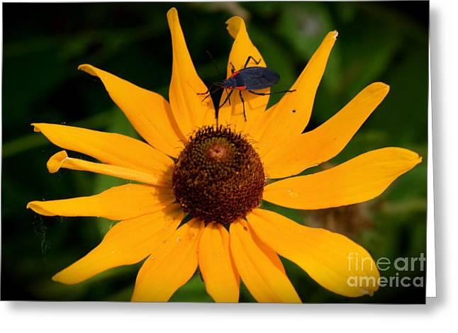Bug On A Flower Greeting Card by Sherri Williams