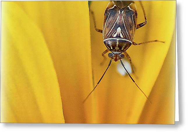 Greeting Card featuring the photograph Bug On Flower by Rick Hartigan
