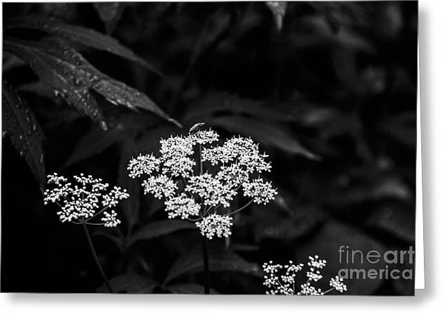 Bug On Flowers Black And White Greeting Card by Marina McLain