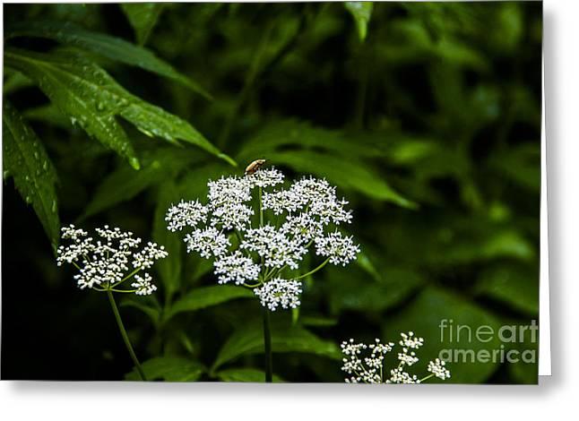 Bug On Flowers Greeting Card by Marina McLain