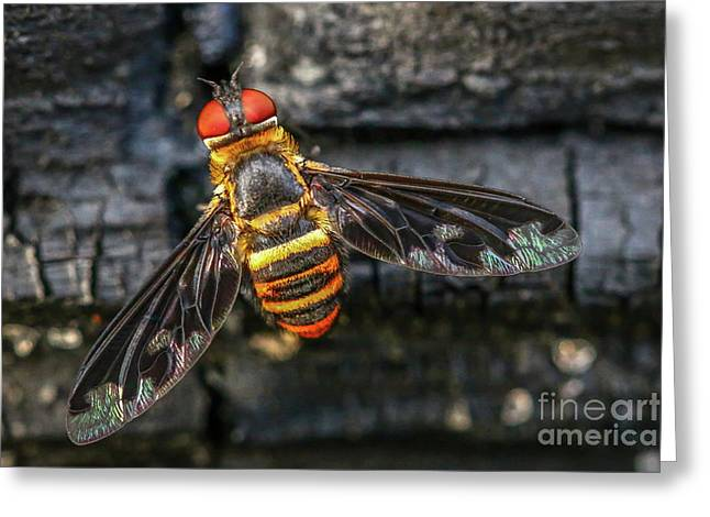 Bug With Red Eyes Greeting Card by Tom Claud