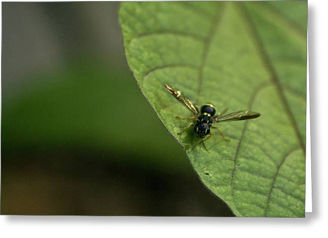 Bugeyed Fly Greeting Card by Douglas Barnett